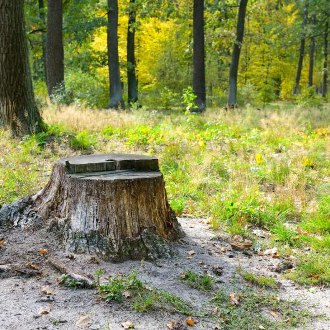 Signs it's time to get rid of that stump in your yard